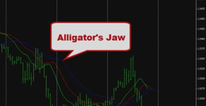 Educational video. Alligator Indicator